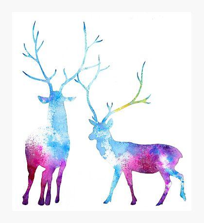 My Deer Universe Photographic Print