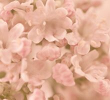 Valarian Blossoms Macro Sticker