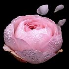 Pink rose with water droplets. by OscarHamptonArt