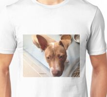 Pitbull Stella Unisex T-Shirt
