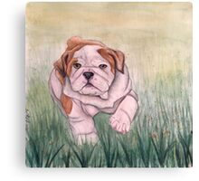 English Bulldog-scroll down to view more of my work Canvas Print