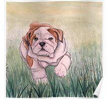 English Bulldog-scroll down to view more of my work Poster