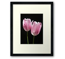 Two Pink Tulips Framed Print