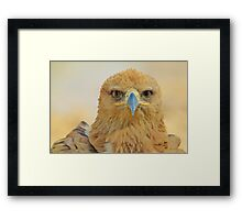 Tawny Eagle - Focus Intensity - African Wild Bird Background Framed Print