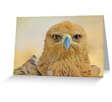 Tawny Eagle - Focus Intensity - African Wild Bird Background Greeting Card