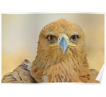 Tawny Eagle - Focus Intensity - African Wild Bird Background Poster