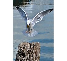 Landing Gear Down Photographic Print
