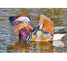 Mandarin Duck At Mangerton Mill, Dorset Photographic Print