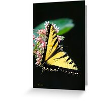 Swallowtail Butterfly and Milkweed Flowers Greeting Card