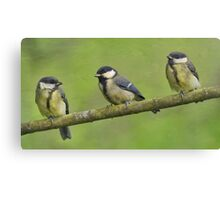 Three Little Tits Canvas Print