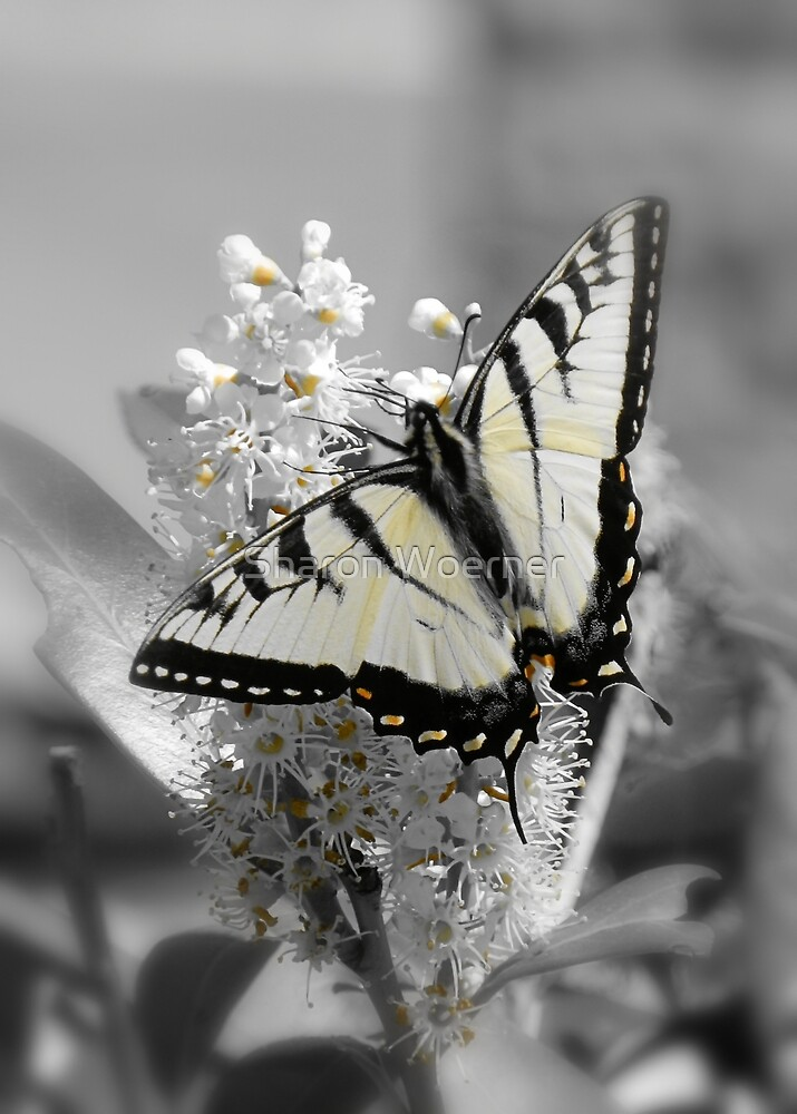 Subtle Swallowtail Butterfly by Sharon Woerner