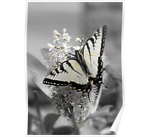 Subtle Swallowtail Butterfly Poster