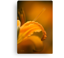 Luscious Orange Canvas Print