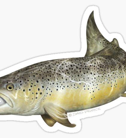 Brown Trout Sticker