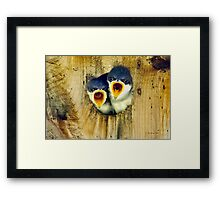 Two Tree Swallow Chicks Framed Print