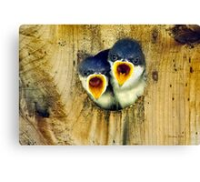 Two Tree Swallow Chicks Canvas Print