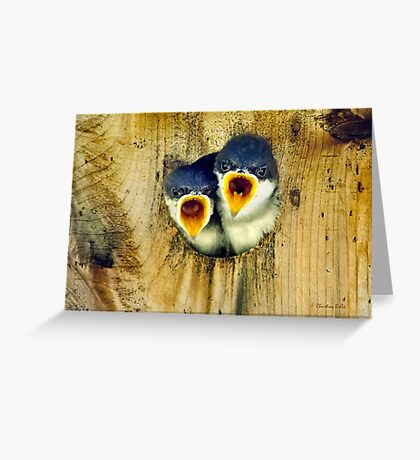 Tree Swallow Chicks Greeting Card