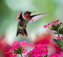Ruby Garden Jewel Hummingbird by Christina Rollo