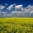 Yellow Fields Of Summer by Bob Christopher