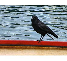 Crow Aboard  Photographic Print