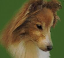 Shy Sheltie by CreativeEm