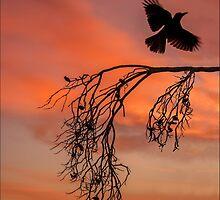 Red Dawn by carol brandt