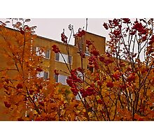 Autumn Mountain Ash - Oil Painting  Photographic Print