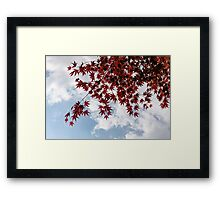 Japanese Maple Red Lace - Horizontal View Downwards Left Framed Print