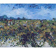 Vincent Van Gogh -  Green Vineyard, 1888 Photographic Print