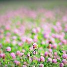 """  Meadow Sleep "" by Richard Couchman"