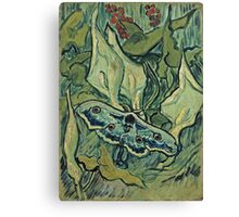 Vincent Van Gogh - Giant Peacock Moth, May 1889 - 1889  Canvas Print