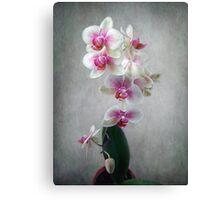Fancy Orchids Canvas Print