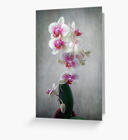 Fancy Orchids Greeting Card