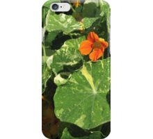 Variegated fans iPhone Case/Skin