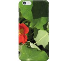 Alaska variegated iPhone Case/Skin