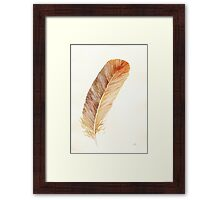 Brown feather study Framed Print