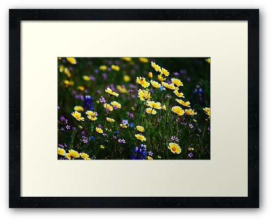 Wildflowers by Ron Hannah