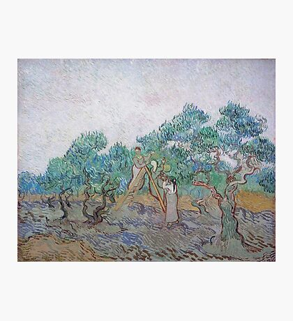 Vincent Van Gogh - Olive Picking, 1889 02 Photographic Print