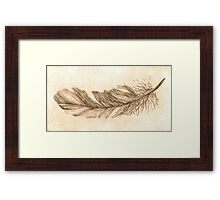 Feather study etching in sepia Framed Print