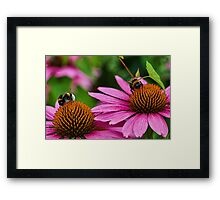 Two bumble bees Framed Print