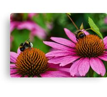 Two bumble bees Canvas Print
