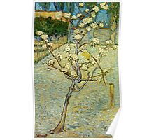 Vincent Van Gogh - Small Pear Tree In Blossom  Poster