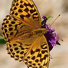 Silver-washed Fritillary by Neil Bygrave (NATURELENS)