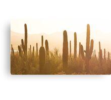 Amazing Sunset Image of Saguaro National Park Canvas Print