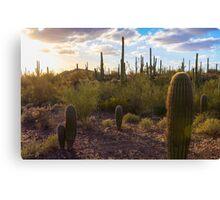 Saguaro National Park Canvas Print