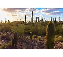 Saguaro National Park Photographic Print