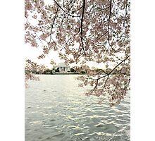 Jefferson memorial cherry blossoms Photographic Print