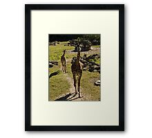 Giraffe Mom and Baby Calf Framed Print