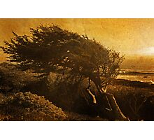 windswept gold Photographic Print
