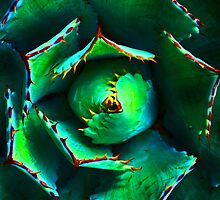 agave by lastgasp